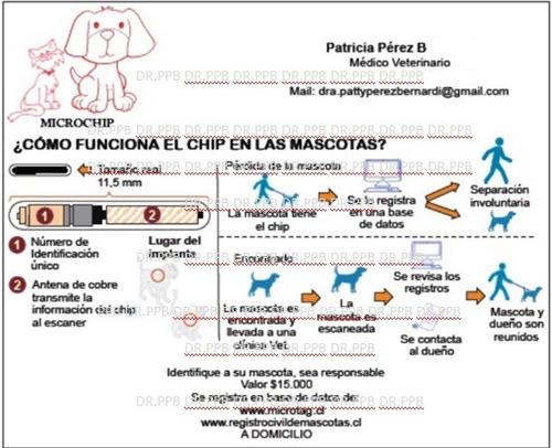 implante de microchip para mascotas a domicilio.