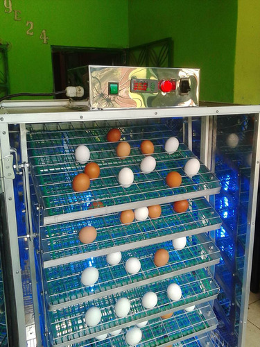 incubadora-nacedora para 600 huevos de gallina
