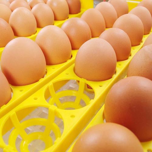 incubadora pollos con volteador 56 huevos automatica oferta!