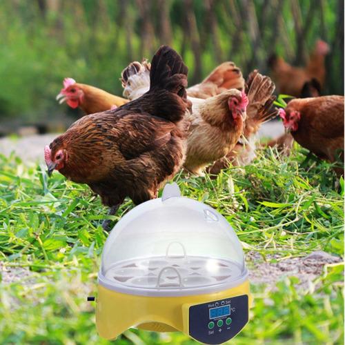 incubadora práctica de 7 huevos para pollo-pato-aves