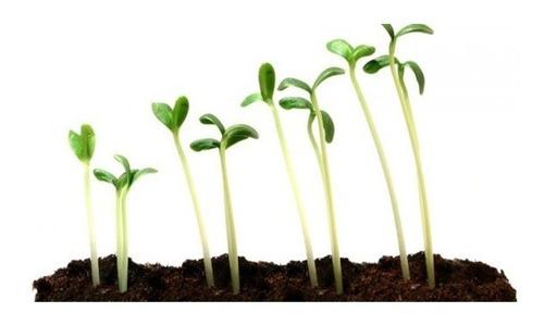 incubadora simen  estufa de cultivo vegetales test pg