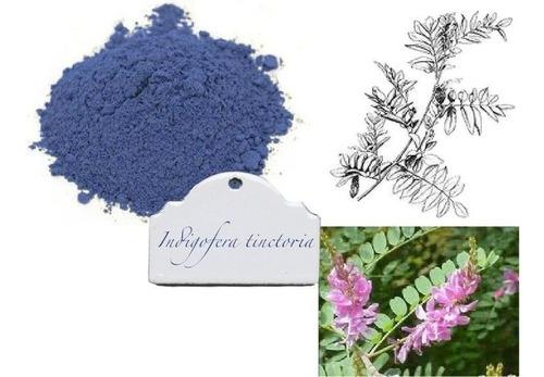 índigo azul - indigofera tinctoria sementes + frete grátis