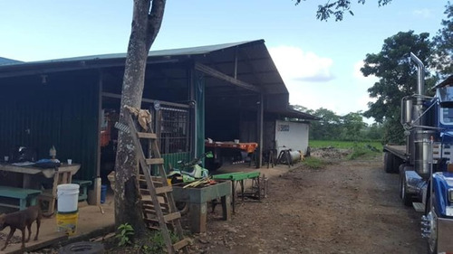 industria tarimera y terreno a la venta