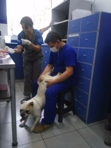 inseminación artificial a domicilio por medico veterinario