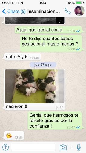 inseminacion artificial canina