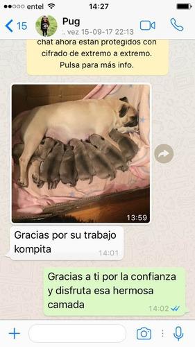 inseminacion artificial canina a domicilio (todas las razas)