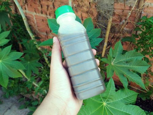 inseticida natural extrato de mamona ricinina