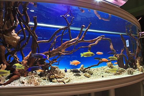 instalacion y mantenimiento de peceras y acuarios marinos