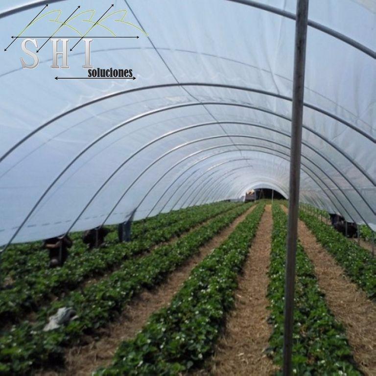 Invernadero macrot nel mts2 en mercado libre for Viveros en zamora