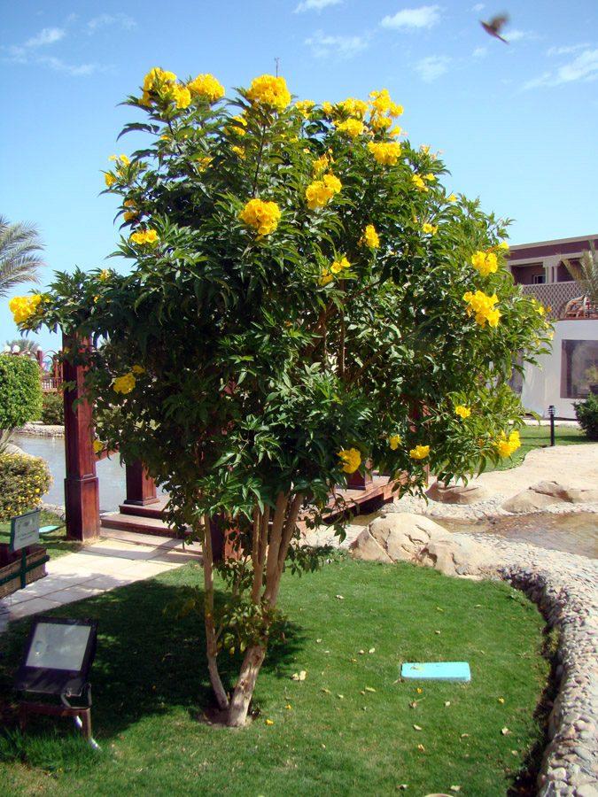 Ip? Mirim An?o De Jardim Sementes Flor Para Mudas - R$ 7 ...
