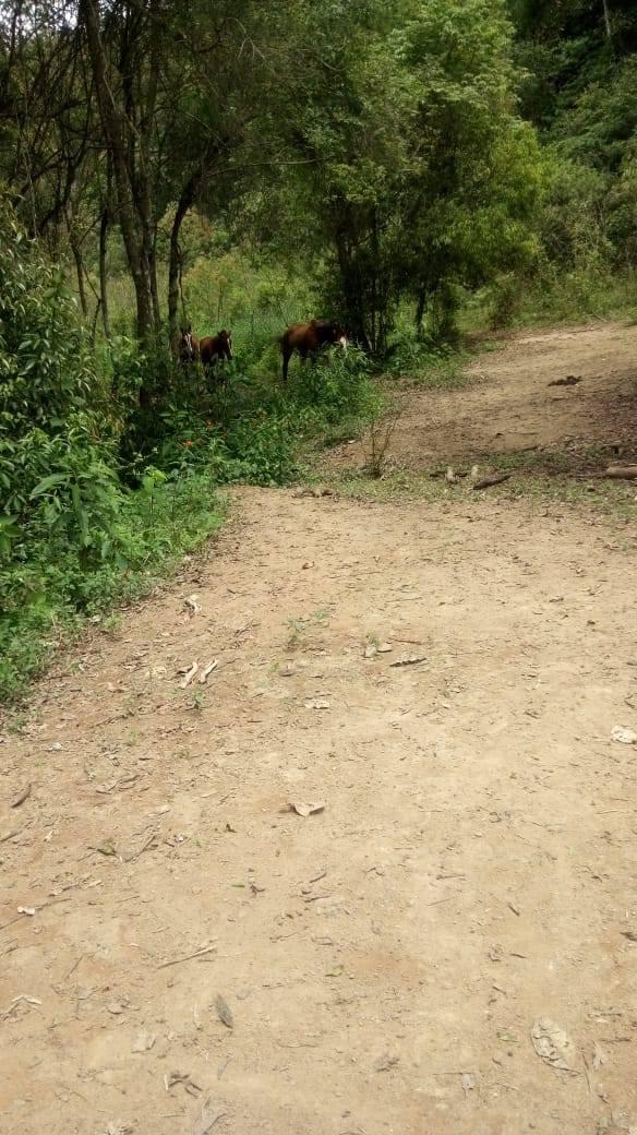 j2 otimos lotes a 10km do centro de ibiúna, boa topografia