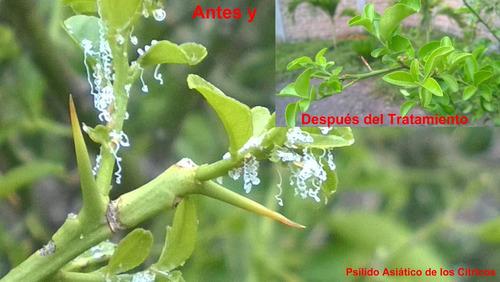 jabón potásico, 200 ml aceite de neem y atomizador