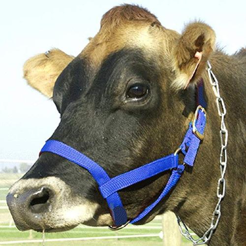 jaquimas para terner@s, vaconas, vacas y toros