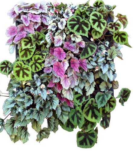 jardim vertical kit eco 9 wallgreen