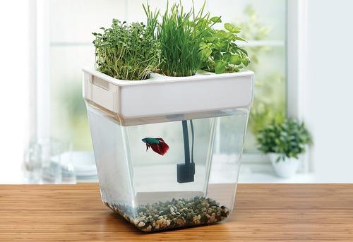 jardin de estanque de peces back to the roots