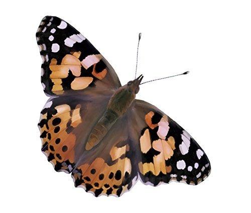 jardín de mariposas de insectos lore deluxe con copa viva de