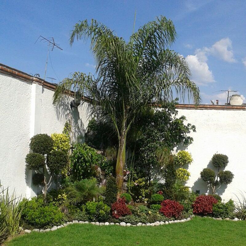 Jardin palmas lindo lugar cuautitlan izcalli con cascada - Diseno de cascadas para jardin ...