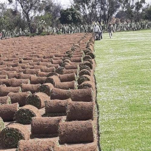 jardin pasto en rollo y plantas ayuda al jardinero