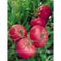 Semillas De Rose Pink Big Tomate