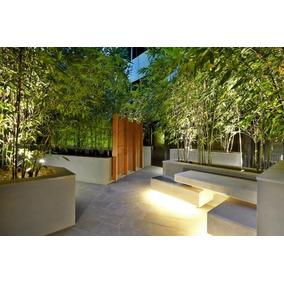 7cb3cb91d0270 Venta De Plantas Bambu Xochimilco - Jardín y ExteriorTodo para en Mercado  Libre México