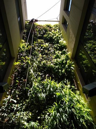 jardin vertical, armado, mantenimiento y puestas en valor