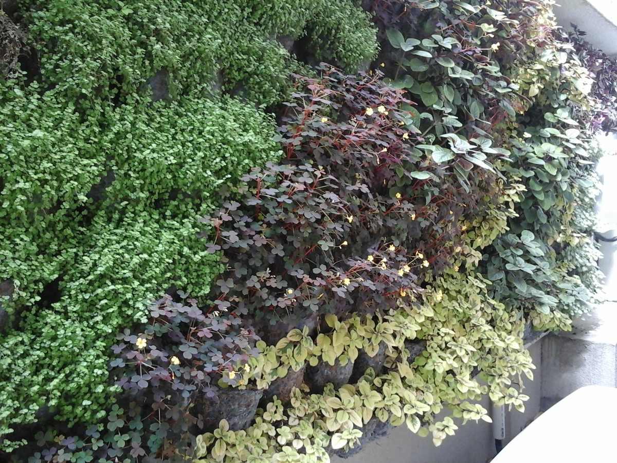 Como hacer un jardin vertical exterior hacer un jardin for Jardin vertical exterior
