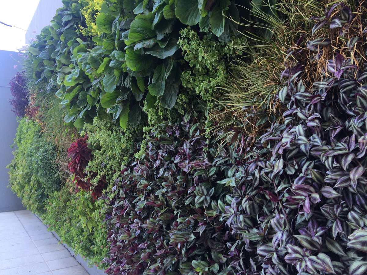 Como hacer un jardin vertical exterior trendy plantas - Como hacer un muro verde ...