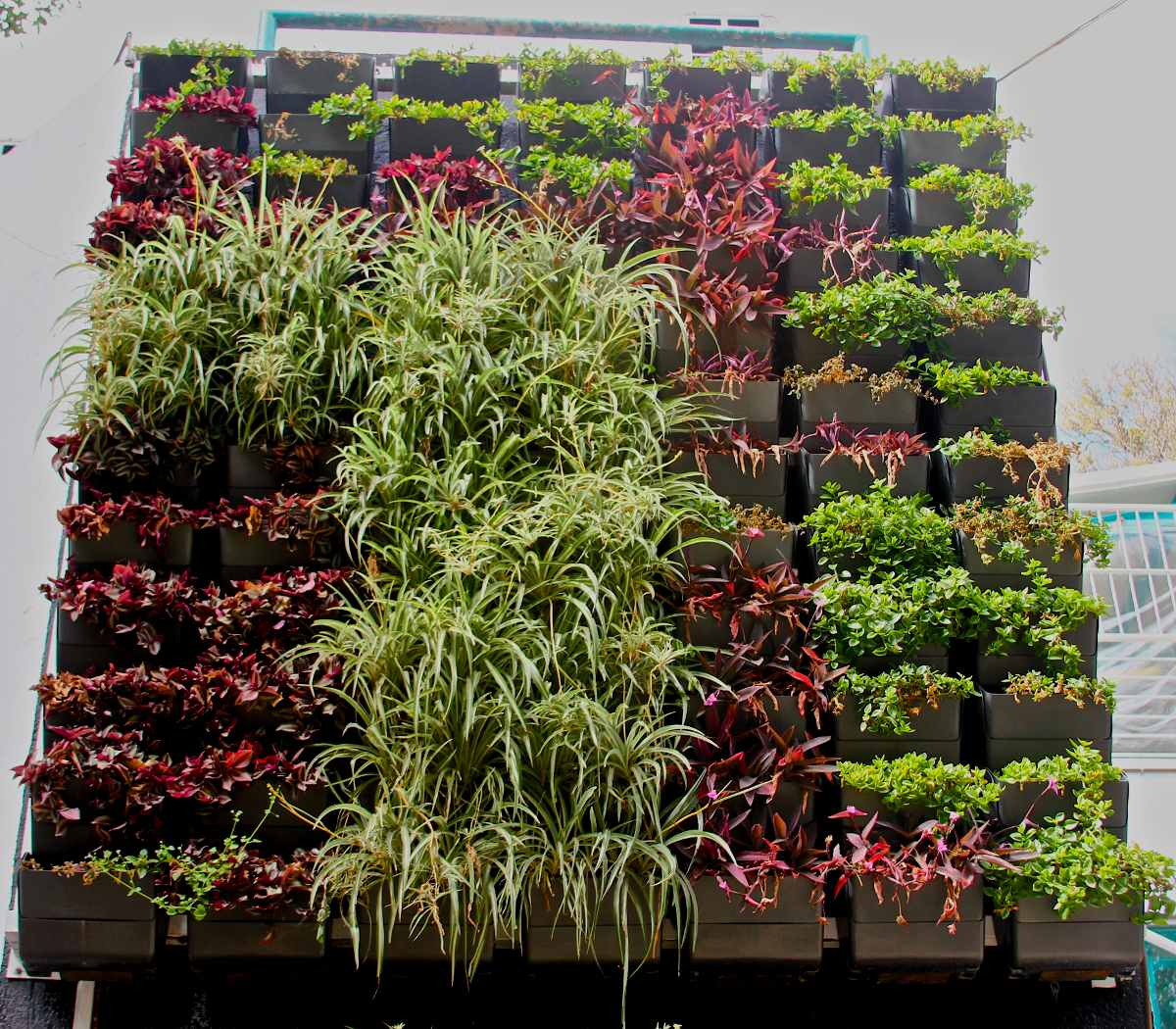 Jard n vertical muro verde huerto urbano dise o jardines for Jardin vertical mercadolibre
