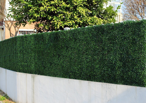 jardín vertical planta