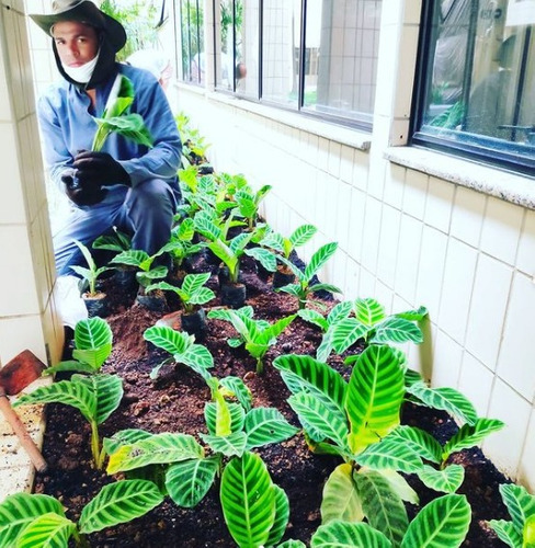 jardinagem, paisagismo, manutenção de jardim chacara morumbi
