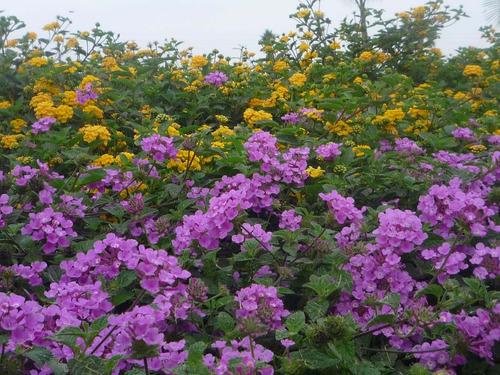 jardndiseo de jardines y plantas de interior