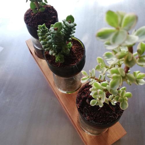 jardinera autorregante hierbas, trío