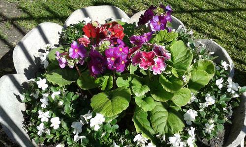 jardineria-construccion-diseño-c/cesped natural o artificial