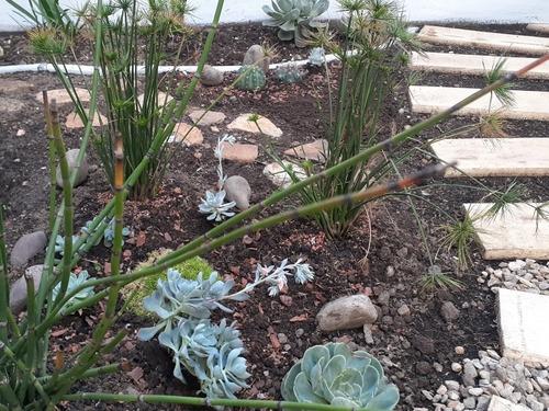 jardinería diseño de jardines restauración y mantenimiento