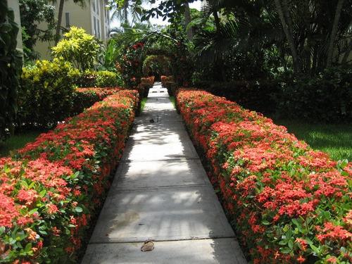 jardineria en general