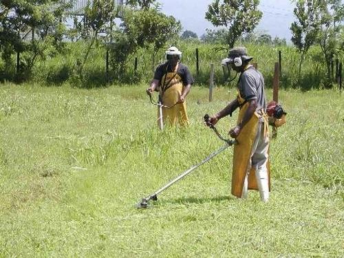 jardineria en general limpieza de terrenos