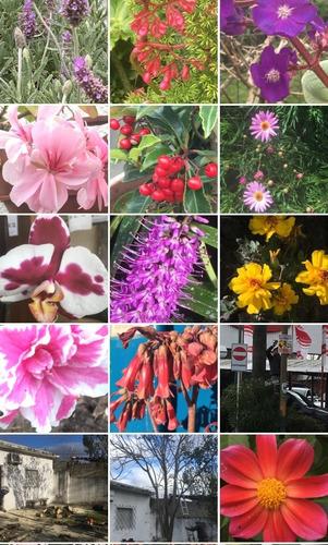 jardinería, especialista en podas y recuperación de jardines