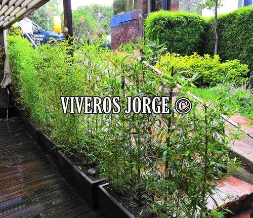 jardinería, mantenimiento de áreas verdes y paisajismo.