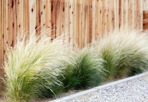 jardinería paisajismo mantenimiento