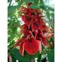 Plantas Arbol Anacahuita O Ceibo Para Sombra Muy Limpio