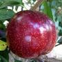 Combo Surtido - 12 Arboles Frutales A Elegir X $ 6.000.-