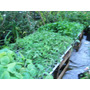 Plantines Huerta Organica Docena