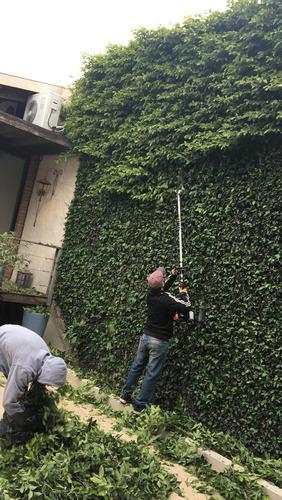jardinería poda arboles mantenimiento fumigación riego