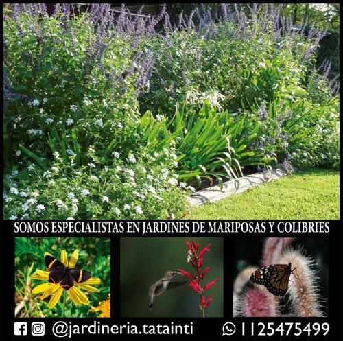 jardineria y diseño de paisajes, parquizaciones y poda
