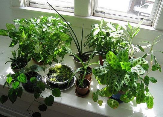 Jardineria y mantenimiento de plantas de interior de casas for Jardineria y plantas