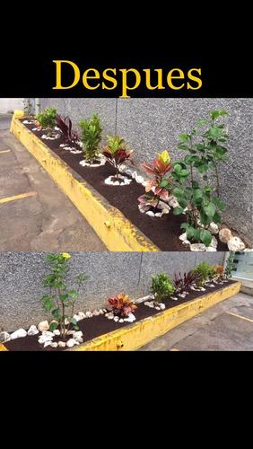 jardinería y servicios de mantenimiento de areas verdes