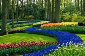 jardineria,paisajismo,mantenimiento,fumigacion,podas,riego