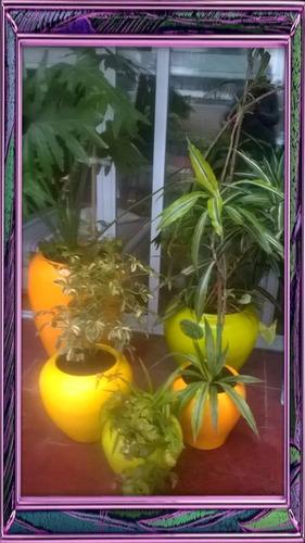 jardines e interiores . diseño mantenimiento. eventos!