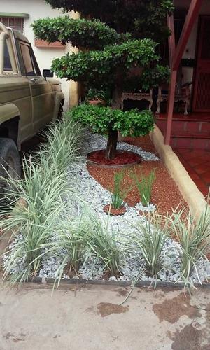 jardines verticales barquisimeto 0412-0563796