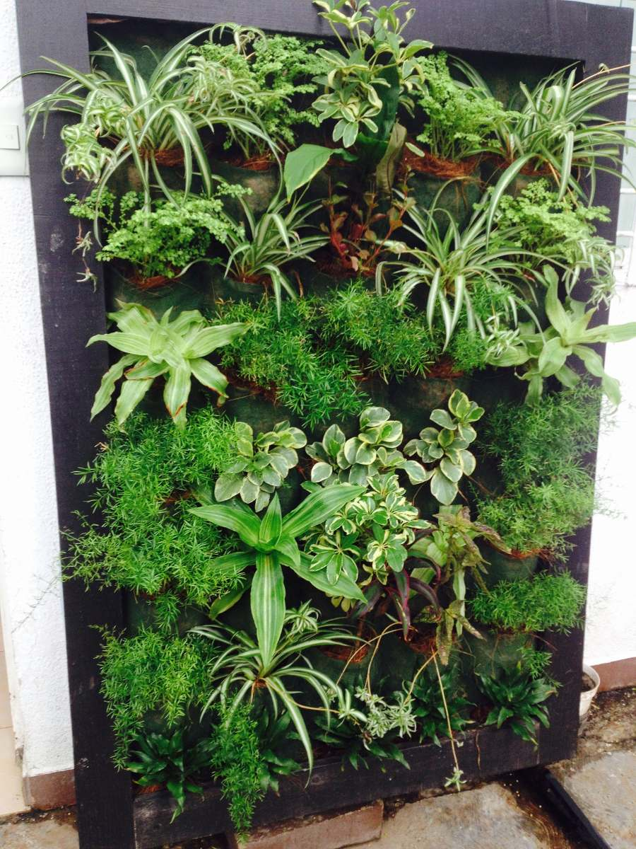 jardines verticales barquisimeto 0412 0563796 bs 190